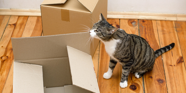 It's important to ease your pet into their new surroundings. Photo / Thinkstock