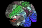 Researchers have expanded science's understanding of the human brain by identifying and mapping scores of new areas in the cortex. Image / Matthew Glasser, David Van Essen, Washington University.