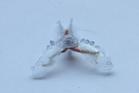 Strange but true: Part slug, part robot