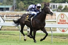 Iwannadancelikehim is set to raise the bar. Picture / Race Images