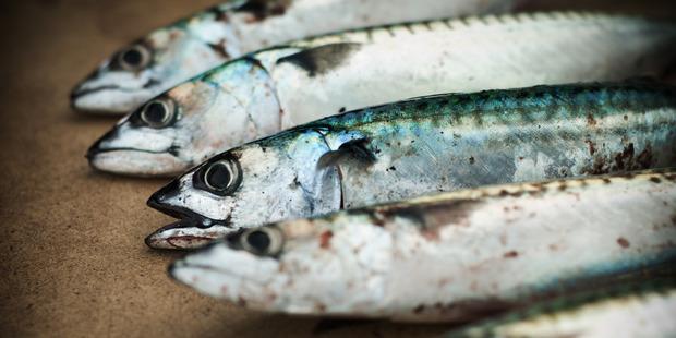 Oily fish cuts bowel cancer deaths