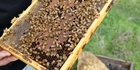 Beehives are a lucrative commodity for thieves.