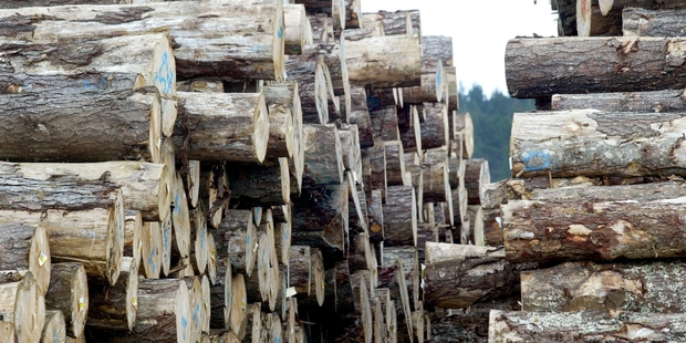 HUGE HARVEST: The volume of logs coming through Napier Port will more than double by 2020. PHOTO / NZ HERALD