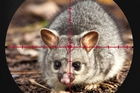 A new $28 million joint venture, Predator Free New Zealand Limited, will identify large-scale pest eradication projects and attract private investment to boost their reach.