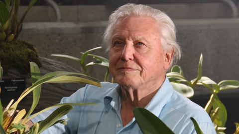 Sir David Attenborough Narrating Pokemon Go Is All You Hoped For
