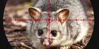 Ospri stands by disputed possum facts in ad