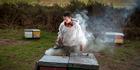 BUZZ TAKEN: Mossop's Honey has had $50,000 worth of bee hives stolen in the last six months. PHOTO/ANDREW WARNER