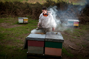 Thieves have stolen $50,000 worth of beehives from Mossop's Honey in the past six months.