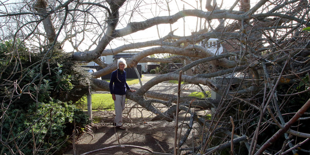 Irene Back stands by the tree that fell down and blocked her driveway. Photo/Stuart Munro