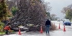 Watch: Strong winds knock down tree