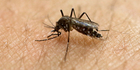 Zika's littlest victims could suffer from microcephaly as well as other birth defects that may not be immediately apparent, including vision defects, hearing problems and seizure disorders. Photo/AP