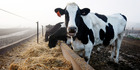A report finds sharemilkers need to be better equipped to survive the climate of volatility through contracts that are flexible.
