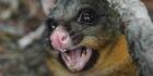 Scientists applaud pest plan