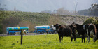 Fonterra has said the main purpose of the announcement was to give an indication of its earnings for the new financial year. Photo / Christine Cornege