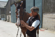 Andrew Nicholson prepares his up-and-coming mount Jetset for a galloping session. Photo / Andrew Alderson