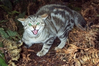 Woodville's feral cats are reproducing in great numbers causing the town's problem to grow.