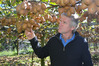 Northland kiwifruit grower Kerry Farrand had to dump nearly 30,000 trays of gold kiwifruit after powerful insecticide Calypso was sprayed on the fruit growing.