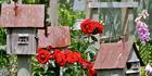 Festival gardens: Thwaites. Photo/supplied