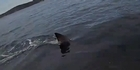 Watch: Huge shark circles Australian kayaker
