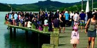420 people have said NO! but Mangonui's boardwalk safety barriers are going ahead