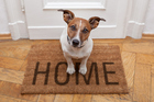 It is important to train your dog to manage when you're out of the house. Photo/Thinkstock