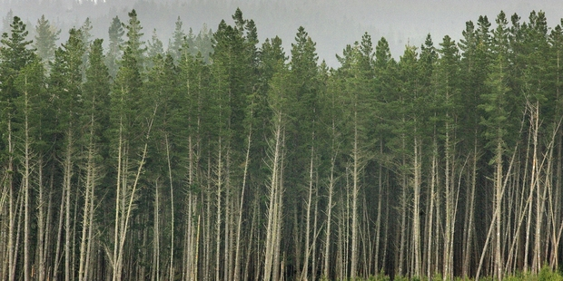 Forestry in the Central North Island has competitive advantages, an industry specialist says.