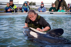 octor Ingrid Visser with the young orca. Photo/Andrew Warner.