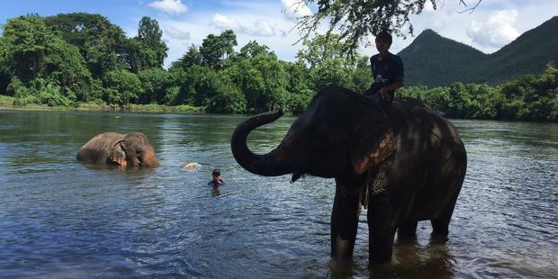 Loading Volunteers and tourists bathe elephants at ElephantsWorld in Thailand. Photo / Supplied