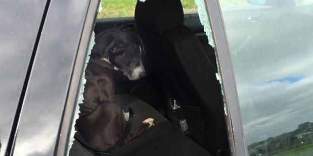 Loading Kataraina Cobain found her car window smashed and a dog inside. Photo/supplied