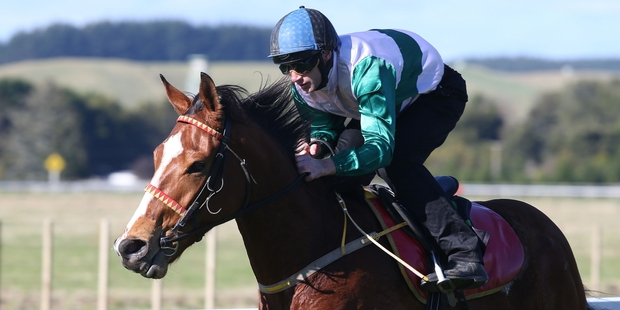 Southern Icon wins in style at the Te Teko trials yesterday. Photo / Trish Dunell