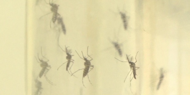 Loading Ten new cases of Zika have been discovered in Miami.