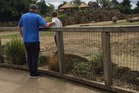 A boy was pictured standing in a rhino enclosure at Dublin Zoo. Photo / @Adriannasss Twitter