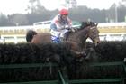 Australian jockey Paul Hamblin and Upper Cut at Riccarton yesterday. Photo / Race Images Chch