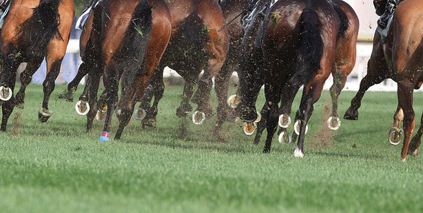 When Valley Girl won Saturday's Harcourts Optimize Open at Ruakaka is was clear the transtasman assault could begin earlier than usual. Photo / Getty Images