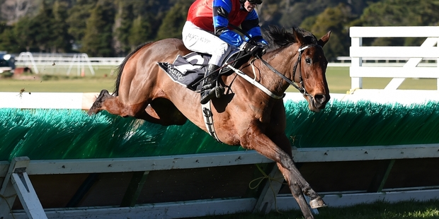 Wee Biskit earned her weight this year through her Wellington Hurdles win in July.Picture / Royden Williams