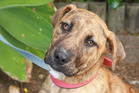 Ember is a sweet-natured dog looking for a home.