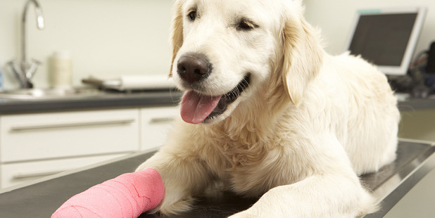 If your pet has suffered an injury here are a few low-impact ways to keep their tails wagging. Photo / Getty Images