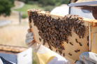 The woman was offered work as a beekeeper when she was eight months pregnant. Photo / Getty Images