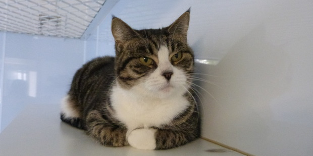 Karen is a friendly and quiet cat looking for a home.