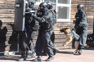Tauranga police dog, Asta in her new stab resistant vest. Photo/John Borren