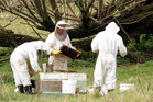 Work and Income told a pregnant woman to start work as a beekeeper two weeks before she was due to give birth.