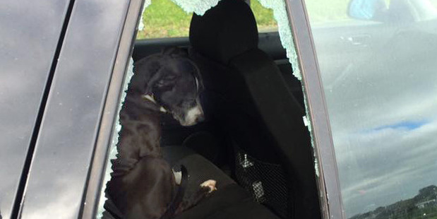 UNEXPECTED VISITOR: The scene that greeted Kataraina Cobain - a strange dog sitting in her car with the window smashed.