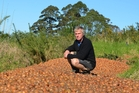 Kiwifruit grower Kerry Farrand had to dump about 30,000 trays of his prized gold kiwifruit after they were sabotaged. Photo / Debbie Beaddle