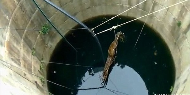 Loading Villagers dropped a log into the well to help the leopard keep afloat.