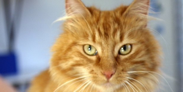 Ultimately cats are the Donald Trump of the animal kingdom. Furry, smug, self-serving and dishonest.