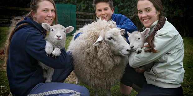 Lucky the sheep (formally known as Lucky the lamb) is now the family pet and she's just had twins of her own. Abby, 17, Morgan, 13, and Jessica, 18, with Jet, Lucky and Rocket. Photo/John Borren