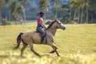 Tom Nangam, the horse whisperer of Vanuatu. Photo / Maria de Jong