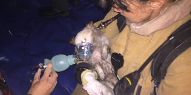 Fire fighters gave oxygen to Pup-pup before the vets worked hard to save his life. Unfortunately he died. Photo / Twitter