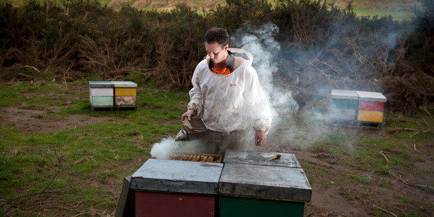 Loading Thieves have stolen $50,000 worth of beehives from Mossop's Honey. Photo/file