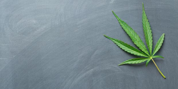Loading Cannabis law reform is finding wide acceptance including among National supporters, according to a new poll. Photo / 123RF